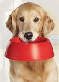 можно ли давать собаке зодак при аллергии