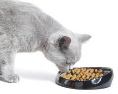Корм для кошек своими руками рецепты 93